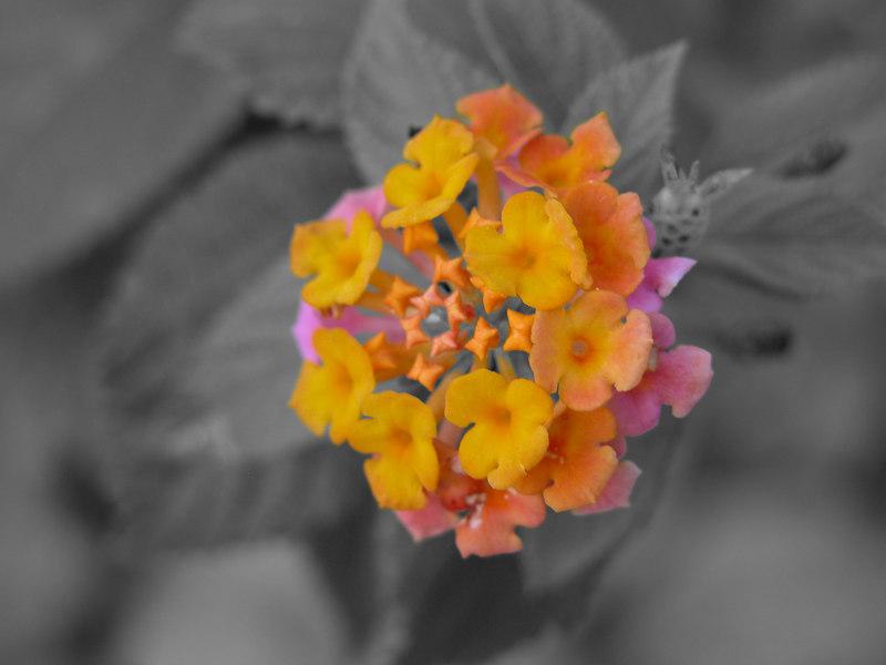 cuba-photo-edit