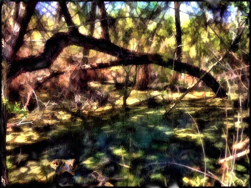 Southern California Swamp