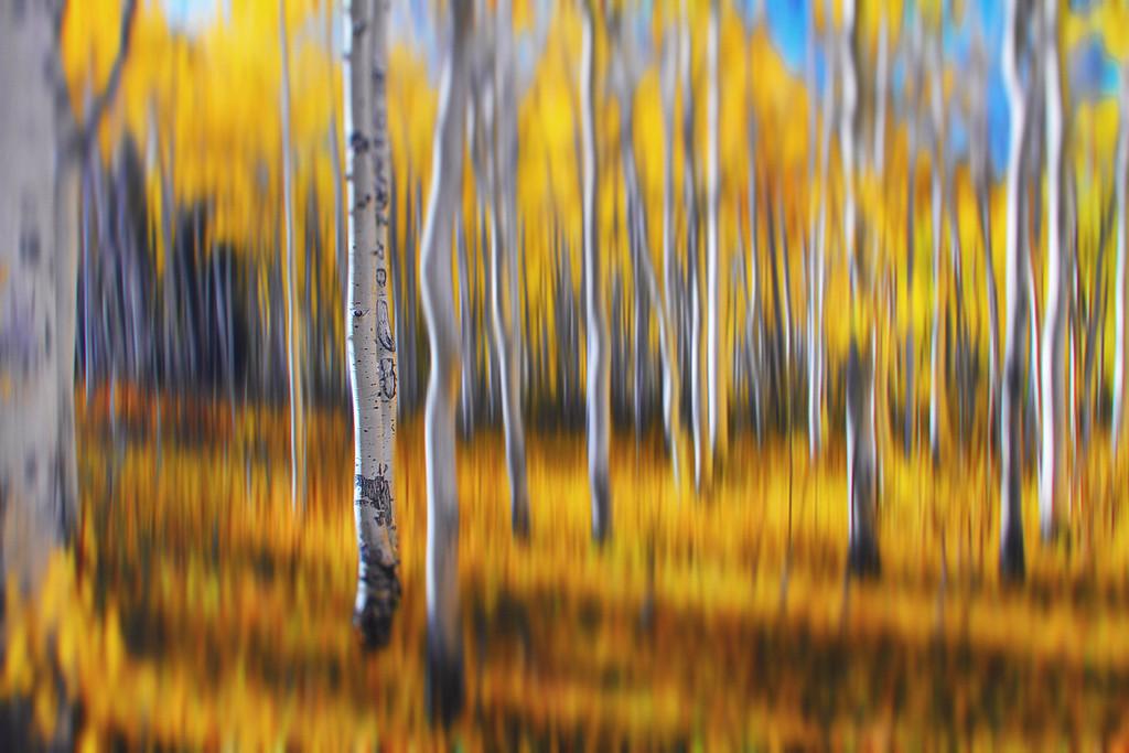 aspen forest blur