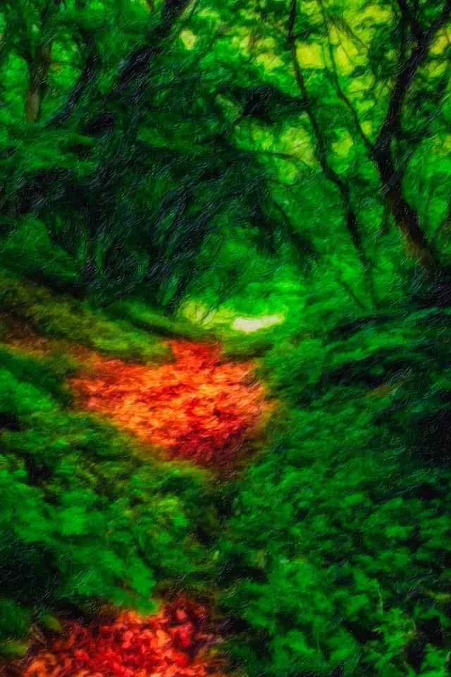 Enchanted walk