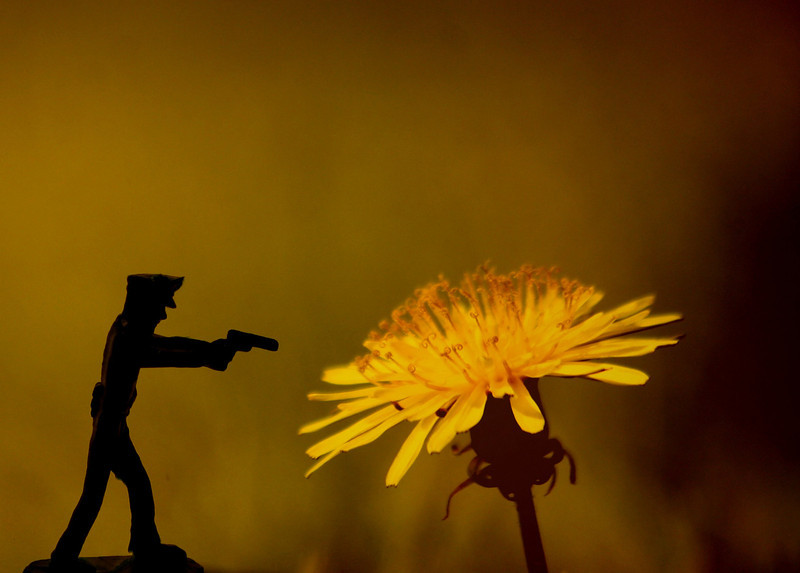 Dandelion Rebellion  Quashed  - By Order Of Wall Street -- (Pave the Planet Patrol)