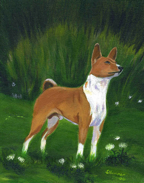 """""""Portrait of A Basenji""""  © 2006    By Sharon Nummer<br /> Acrylic on Canvas<br /> <br /> Original painting sold."""