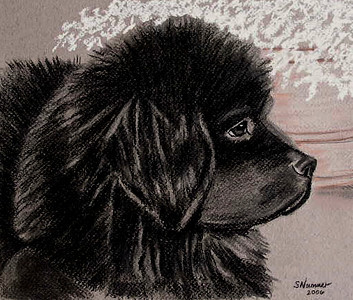 """Baby Newfie""  © 2006  Sharon Nummer  Charcoal Drawing on Tiziano paper.  This is one piece I wish I hadn't sold.  This is one of my very favorite pieces.  The Newfie puppy is my little boy, Watson.  I took the photo from which this drawing was created when he was 12 weeks old. I have reproduced this drawing on a variety of merchandise.  Looks lovely on a ceramic tile."