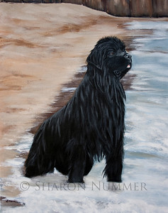 """Beach Patrol""  © Sharon Nummer  Acrylic on Gallery wrap canvas. The original is in a private collection.  Prints available. This painting is a reminder of a beautiful day spent with my Newf, Watson on a very small beach on Lake Michigan.  Watson is watching all the swimmers.  His concern is so evident on his face.  He swam out to each person and herded them to shore.  Watson was following the natural instincts of a Newfoundland dog..to rescue swimmers."