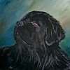 """Young Newfoundland""  © 2007  Sharon Nummer<br /> Watercolor on Strathmore  Cold Press Illustration Board<br /> <br /> Here is a painting I can't sell.  The Newfoundland is my boy, Watson at 2 years old.  His gentle and intelligent expression is so dear to my heart.  Prints, cards, and other items available."