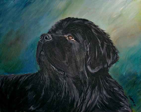 """Young Newfoundland""  © 2007  Sharon Nummer Watercolor on Strathmore  Cold Press Illustration Board  Here is a painting I can't sell.  The Newfoundland is my boy, Watson at 2 years old.  His gentle and intelligent expression is so dear to my heart.  Prints, cards, and other items available."