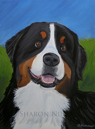 "'Portrait of a Bernese Mountain Dog""   ©  Sharon Nummer   All rights reserved by the artist.  Acrylic painting on canvas  I met this sweet boy at a dog show.  His engaging personality was something I wanted to capture on canvas.  The original has been sold."