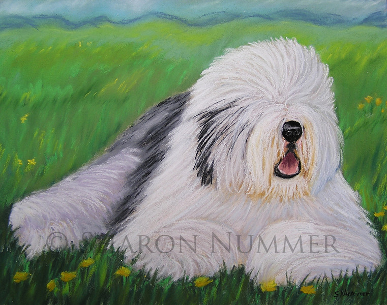 """Summer Afternoon""  ©  Sharon Nummer<br /> Pastel on Paper<br /> <br /> Old English Sheepdogs are one of my favorite breeds to paint.  This beautiful dog was waiting to go into the ring.  I loved the colors of his coat, particularly the black flecks on his head.  I wanted to bring out the textures of his coat using pastels.  <br /> <br /> The original painting is sold."
