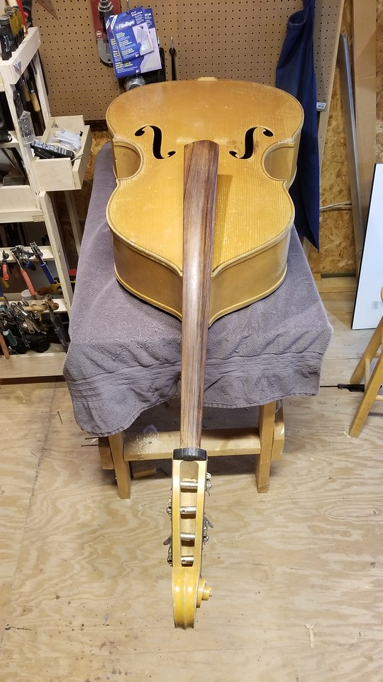 A 1953 Kay blonde double bass sitting on my newly built luthiers workbench.  I said to myself I wouldn't need more than 4 feet for guitars, mandolins and ukes.  So I get the double bass.