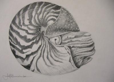 """Nautilus 11""""x14"""" Graphite on Paper"""
