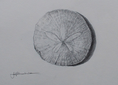 """Pajaro Sand Dollar 9""""x12"""" Graphite on Paper Check out other graphite pieces in the Drawing Gallery!"""