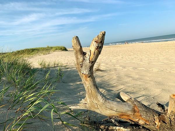 Driftwood at Assateague Island Beach