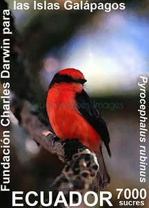 Vermillion Flycatcher Galapagos stamp