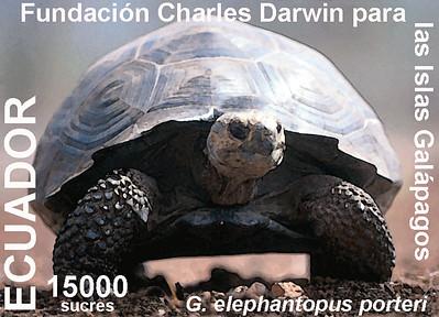 Galapagos tortoise stamp 1999
