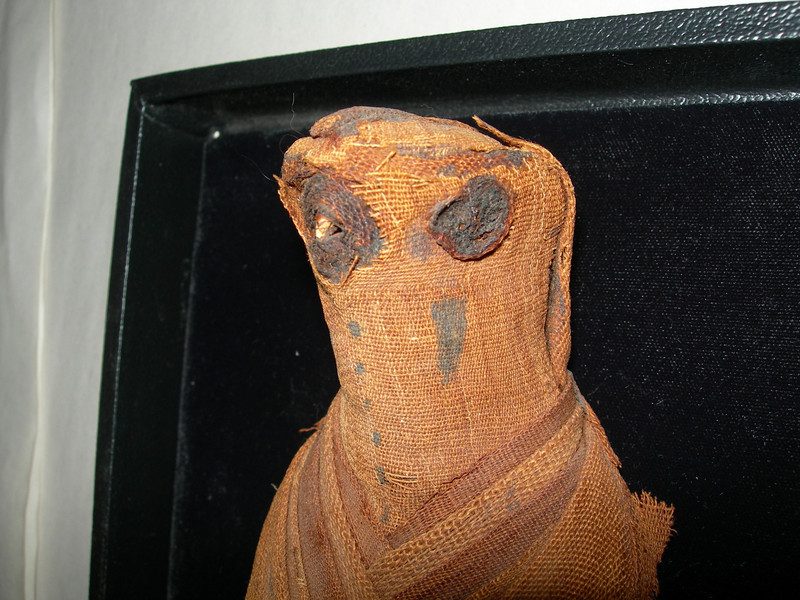 Falcon mummy without case.  This one was without a case, its condition was not good and it had a high estimate.