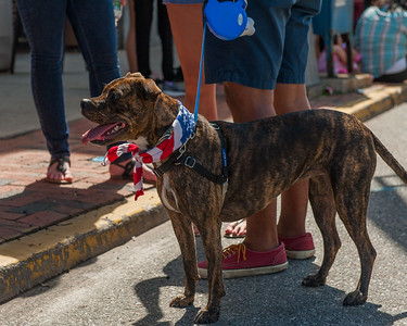 """FURRY & FESTIVE"" 70.00mm, f/5.6, ISO 500, 1/2000, Nikon D700, Nikkor 24-70mm Date: July 4, 2016 Event: 2016 4th of July Parade"