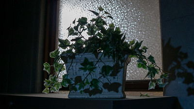 Artificial Ivy