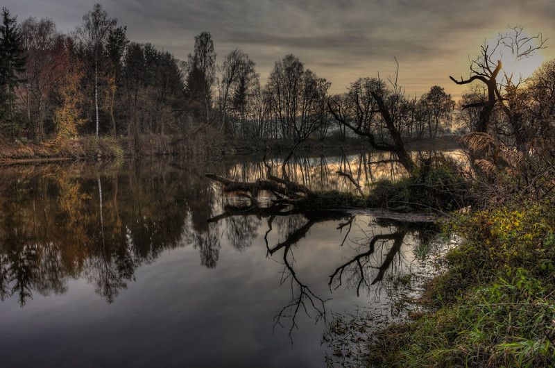 Sunken Trees - At the River Regen