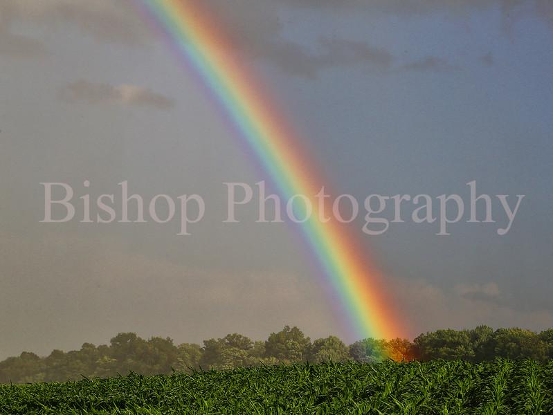rainbow alliance close shopify