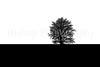 tree on farm field