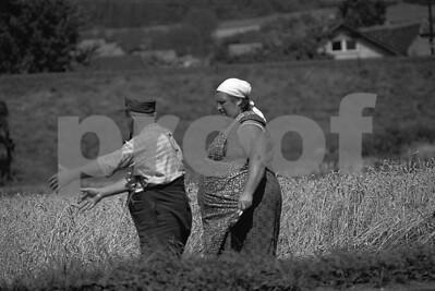 Grain discussion b&w