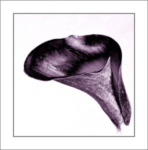 Sleek Calla
