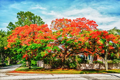 Beautiful red tree""