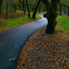 Path in the park<br /> 20 x 24 Float Mounted MetalPrint - High Gloss