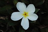 "plumeria bloom on the ground...God's litter is nicer than ours...<br /> <br />  <a href=""http://www.amazon.com/gp/product/1440473218/ref=cm_pdp_rev_itm_img_2"">http://www.amazon.com/gp/product/1440473218/ref=cm_pdp_rev_itm_img_2</a>"