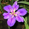 "growing in my backyard near the pond...<br /> <br />  <a href=""http://www.amazon.com/gp/product/1440473218/ref=cm_pdp_rev_itm_img_2"">http://www.amazon.com/gp/product/1440473218/ref=cm_pdp_rev_itm_img_2</a>"