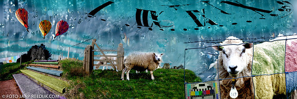 SHEEP © Jaap Reedijk