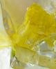 Daffodil Icicle
