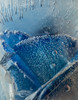 Frozen in Time<br /> A blue rose encased in ice