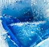 Framed by Ice<br /> A blue rose encased in ice.