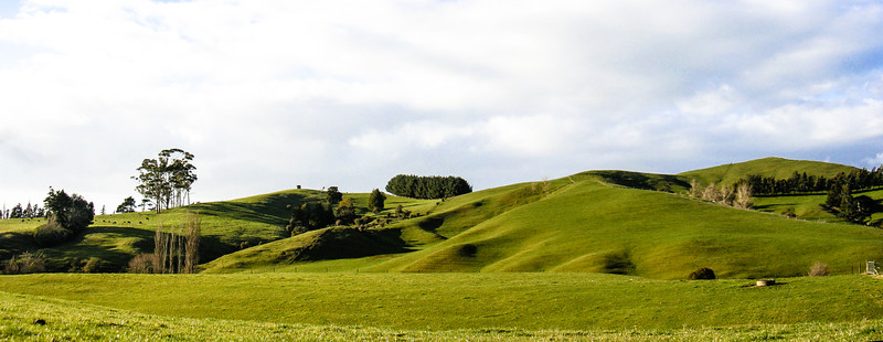 Lovely green meadows on the New Zealand North Island.