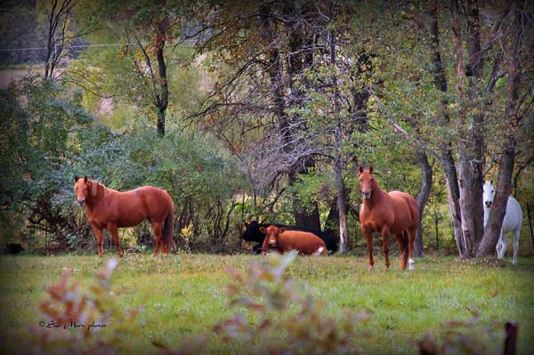 Horses8453