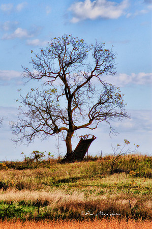 tree8383
