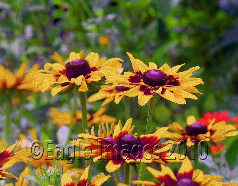 Botanic 7-1-12  182