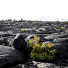 Life out of Fire (lava flow since 1976)