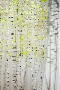 Birch XI, Spring, Detail