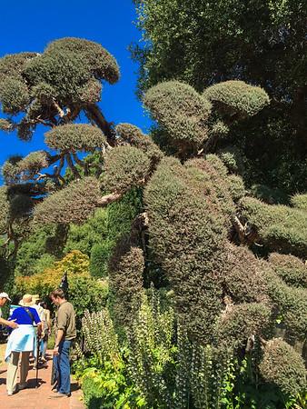 Poodle trim, Filoli Sculpture Exhibit in the Garden. July, 2015.