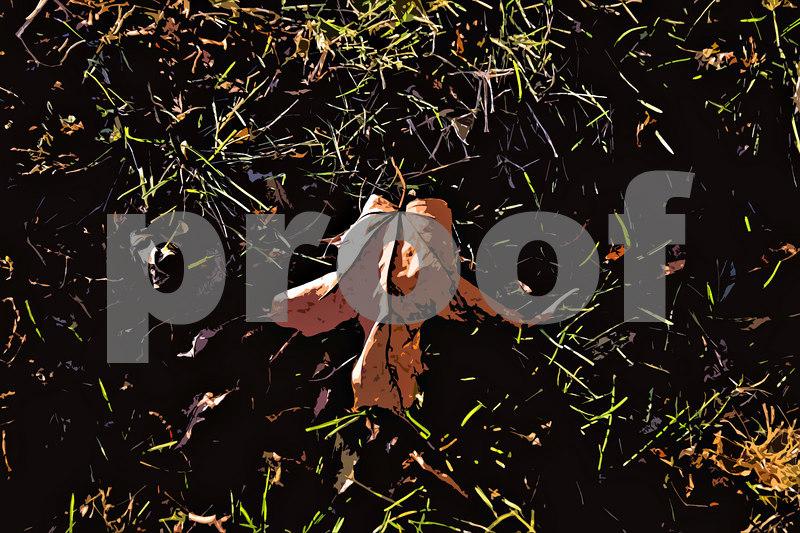 Leaf at Mt Zion, Cutout filter