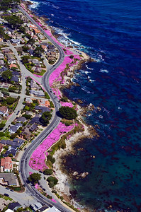 Pacific Grove coastline in spring bloom.