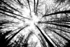 trees0899-BW1