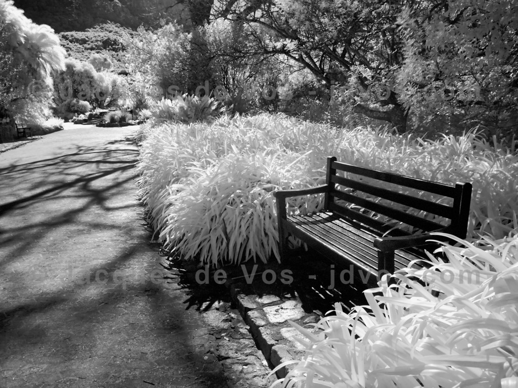 Kirstenbosch Botanical Gardens<br /> <br /> Infrared shot of a bench in the gardens.