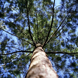 Forest Bokeh - Rolleiflex 3.5F  Rolleiflex 3.5F Fuji Pro 400H  Taken in Tokai forest on a sunny winters day.