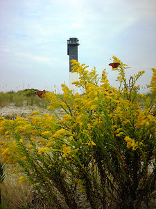Butterflies by the Lighthouse