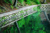Walden Pond Reflections