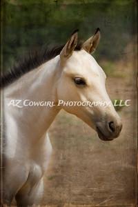 2018-K & J Quarter Horses-032