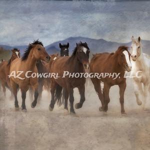 Horses-03